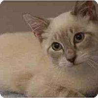 Adopt A Pet :: Pietro - Arlington, VA