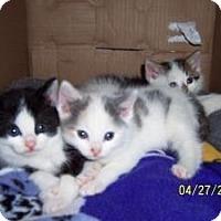 Adopt A Pet :: Shirley, Maxine, Lal, Max,Nel - Island Park, NY