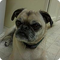 Adopt A Pet :: Tanner - Cumberland, MD