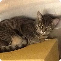 Adopt A Pet :: Caroline - Colmar, PA