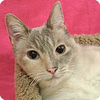 Adopt A Pet :: Sprite - Foothill Ranch, CA