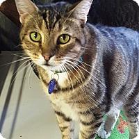 Adopt A Pet :: Irwin - Pasadena, CA