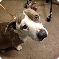 Adopt A Pet :: Pearl - Tucson, AZ