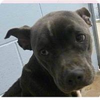 Adopt A Pet :: Diva - Springdale, AR
