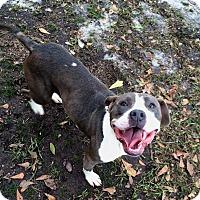 Adopt A Pet :: Dolly - Daleville, AL