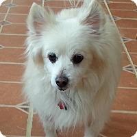 Adopt A Pet :: Elvis of DE - Randallstown, MD