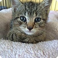 Adopt A Pet :: Starburst - Island Park, NY