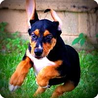 Adopt A Pet :: Don fka Dawn - Glastonbury, CT