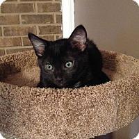 Adopt A Pet :: Max - Homewood, AL