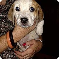 Adopt A Pet :: Sammie - Charlestown, RI