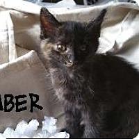 Adopt A Pet :: Ember - Richardson, TX