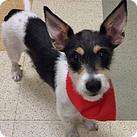 Adopt A Pet :: FOSTER HOME NEEDED: Daisy-Mae - St Paul, MN