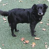 Adopt A Pet :: GAEL - Corning, CA