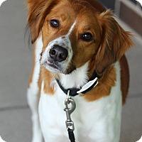 Adopt A Pet :: Carlton - Lafayette, IN