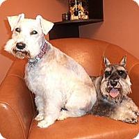 Adopt A Pet :: Zac - Vaudreuil-Dorion, QC