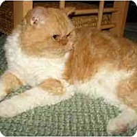 Adopt A Pet :: Hector - Davis, CA