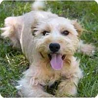 Adopt A Pet :: Schultz - Mocksville, NC