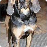 Adopt A Pet :: Cassia - Phoenix, AZ