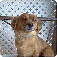 Adopt A Pet :: Sweetpea - Tucson, AZ
