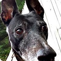 Adopt A Pet :: Jade - Swanzey, NH