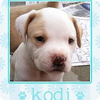 Adopt A Pet :: Kodi - La Quinta, CA