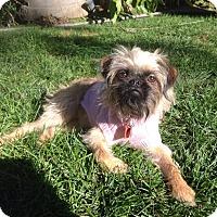 Adopt A Pet :: RAINE - ADOPTION PENDING - Seymour, MO
