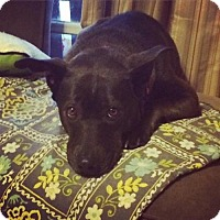 Adopt A Pet :: Blythe - In Foster Home - Marrero, LA