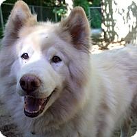 Adopt A Pet :: Hugo - Fennville, MI