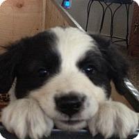 Adopt A Pet :: Johnny D - Greeley, CO