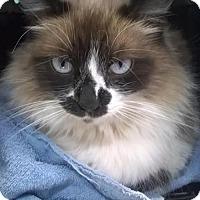 Adopt A Pet :: Sylvie - Laconia, IN