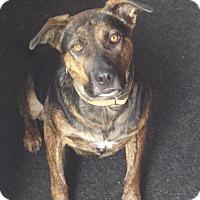 Adopt A Pet :: North - Saskatoon, SK