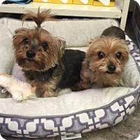 Adopt A Pet :: Lola & Rico - N. Babylon, NY