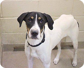 Hound (Unknown Type) Mix Dog for adoption in Richmond, Virginia - Clayton