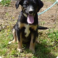 Adopt A Pet :: Lovey - Bedminster, NJ