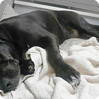 Adopt A Pet :: Lucas - Redding, CA