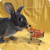 Adopt A Pet :: Juniper - Columbus, OH