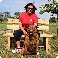 Adopt A Pet :: Ally-May - Elyria, OH