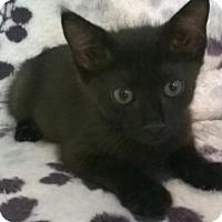 Adopt A Pet :: Aubrey - Orlando, FL