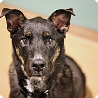 Adopt A Pet :: Fezziwig - Chicago, IL