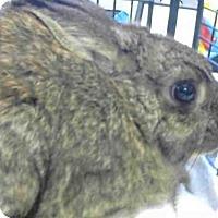 Adopt A Pet :: *FERN - Sacramento, CA