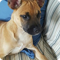 Adopt A Pet :: Gillie - Barnegat, NJ