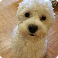 Adopt A Pet :: Mooshie (Friendly to ALL!) - Santa Monica, CA