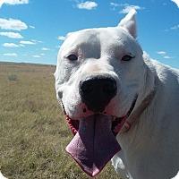 Adopt A Pet :: Manya - Yoder, CO