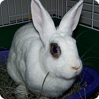 Adopt A Pet :: Plush - Alexandria, VA