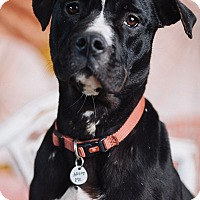 Adopt A Pet :: Ebony - Portland, OR