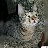 Adopt A Pet :: Boomer - Westchester, CA