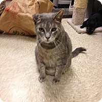 Adopt A Pet :: Mako - Fort Lauderdale, FL