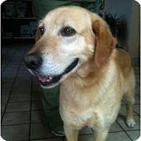 Adopt A Pet :: Marley - Foster, RI