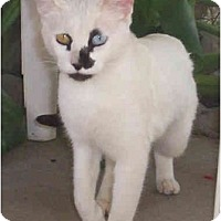 Adopt A Pet :: Shania - Modesto, CA