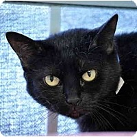 Adopt A Pet :: Bumper - Carencro, LA